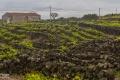 Winanbau auf Pico