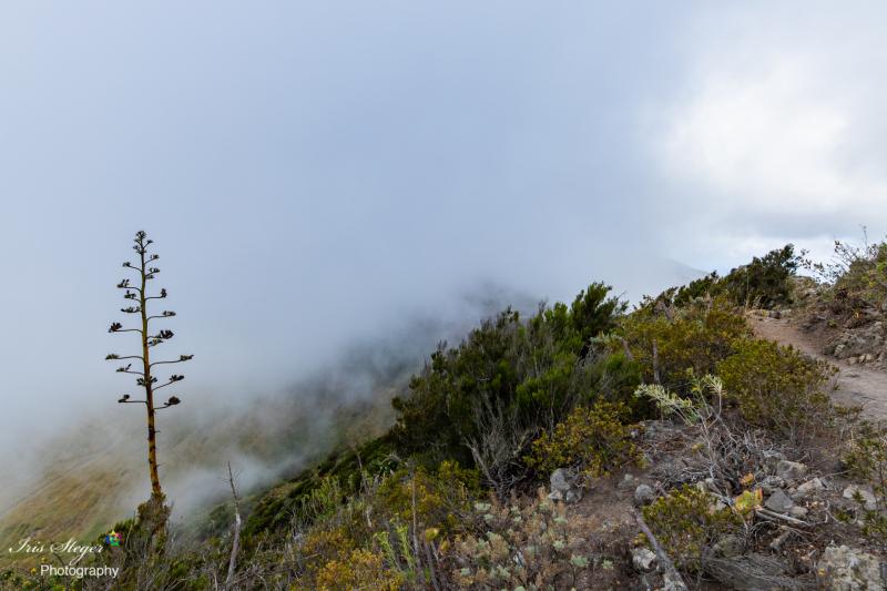 Masca-Schlucht im Nebel