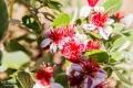 Blumen im Botanicactus Ses Salines