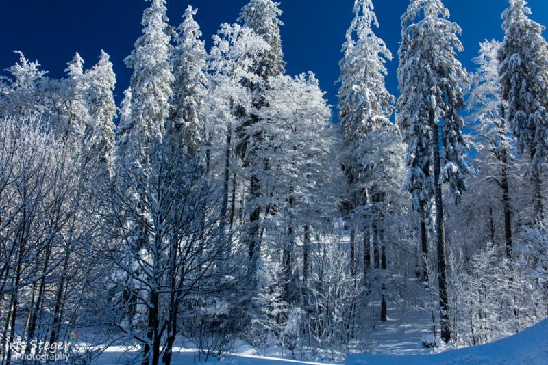 Winterlandschaft Feldberg